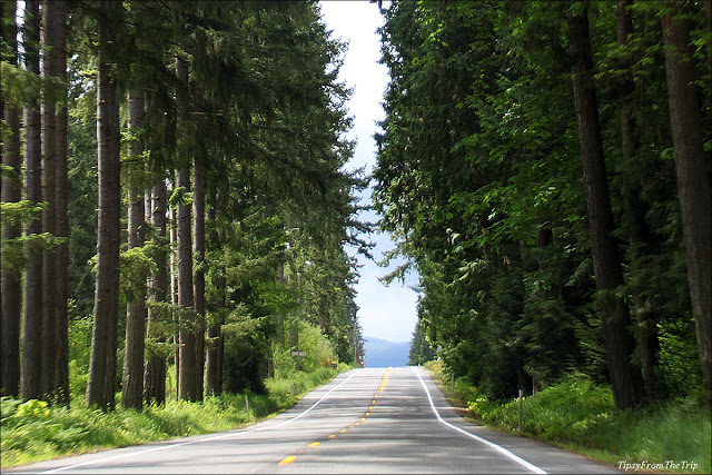 The road to Mount Rainier