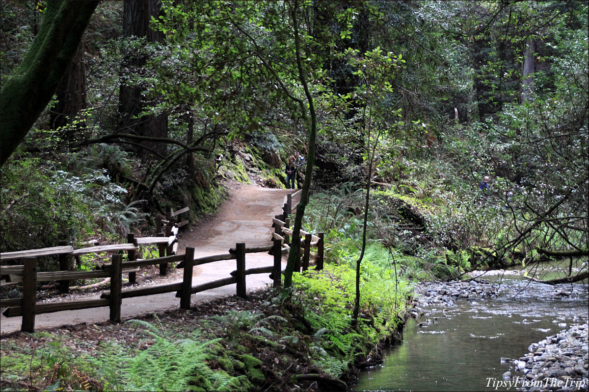 Muir Woods, California.