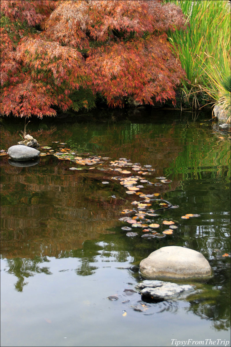 Hakone Gardens in the fall