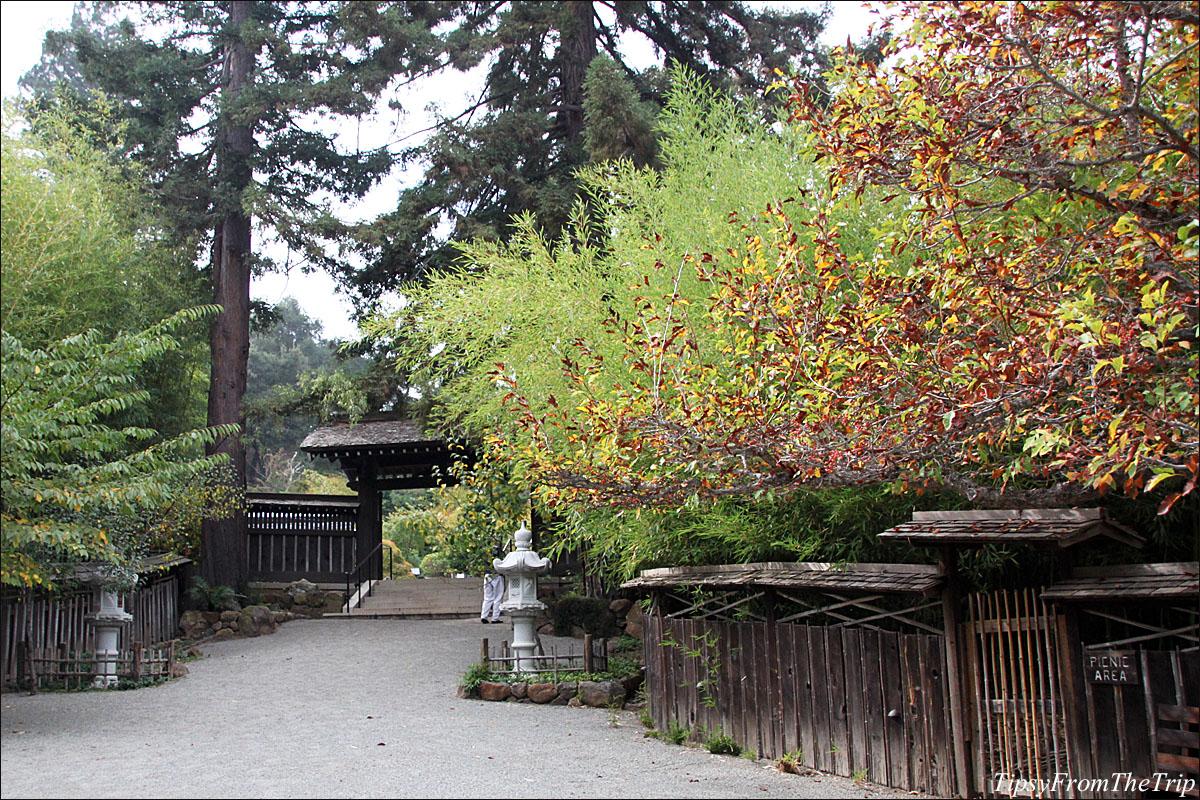 Fall color at Hakone Japanese Garden in Saratoga, CA