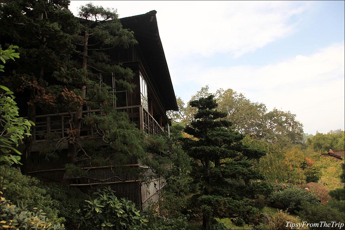 Fall color at Hakone Gardens in Saratoga, CA