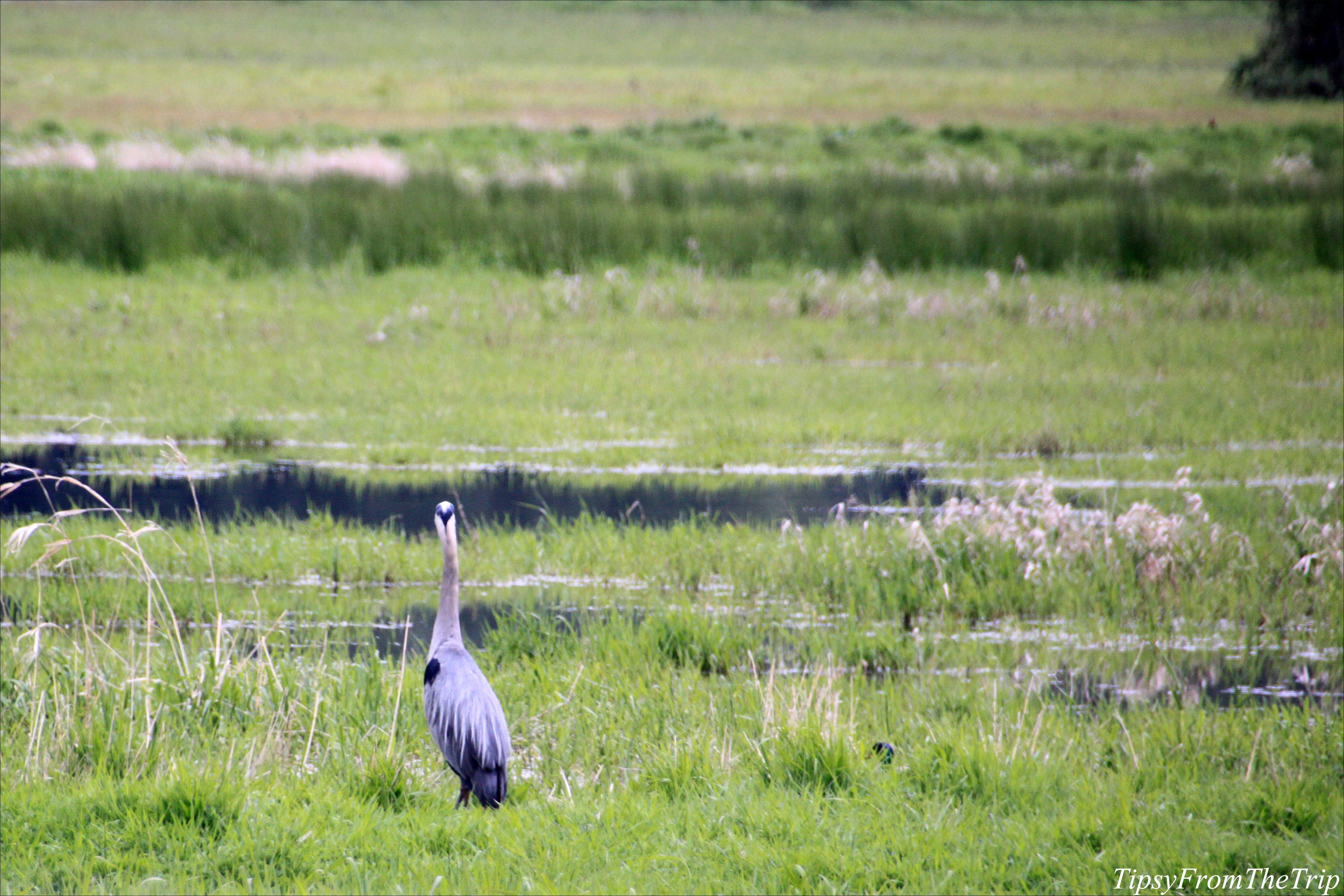 Ridgefield National Wildlife Refuge, WA