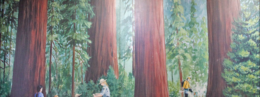 Giant Sequoia mural at the Giant Forest Museum.
